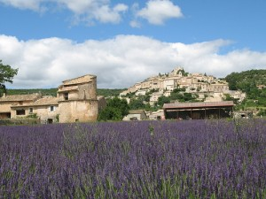 Lavender farm in Simiane-la-Rotonde, France
