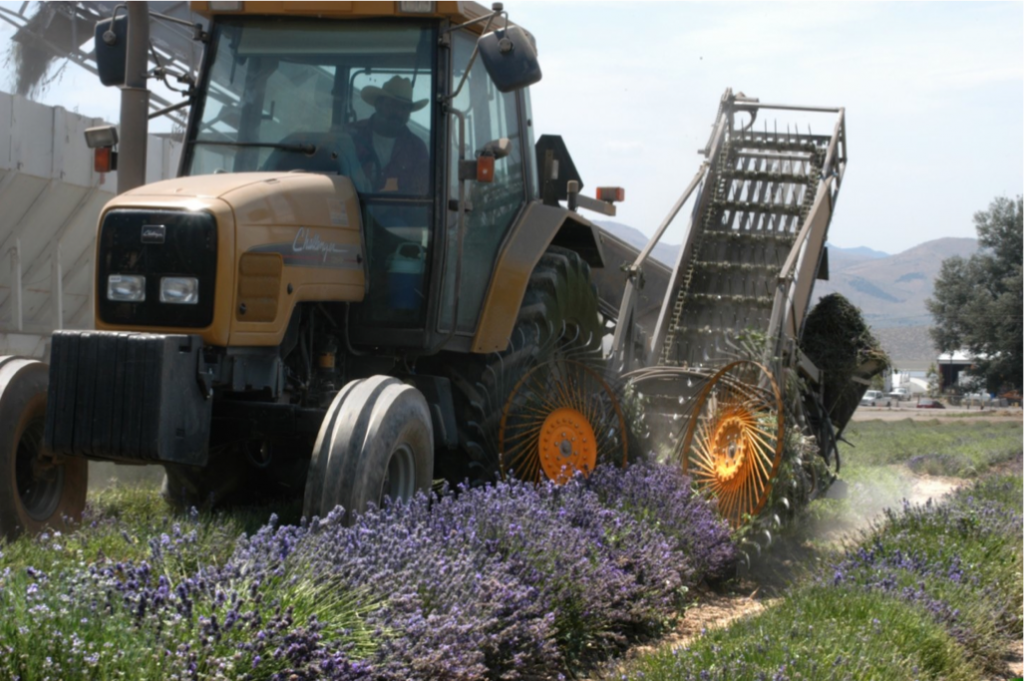 The custom lavender harvester that Gary built.