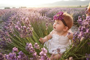 Baby sitting in lavender field