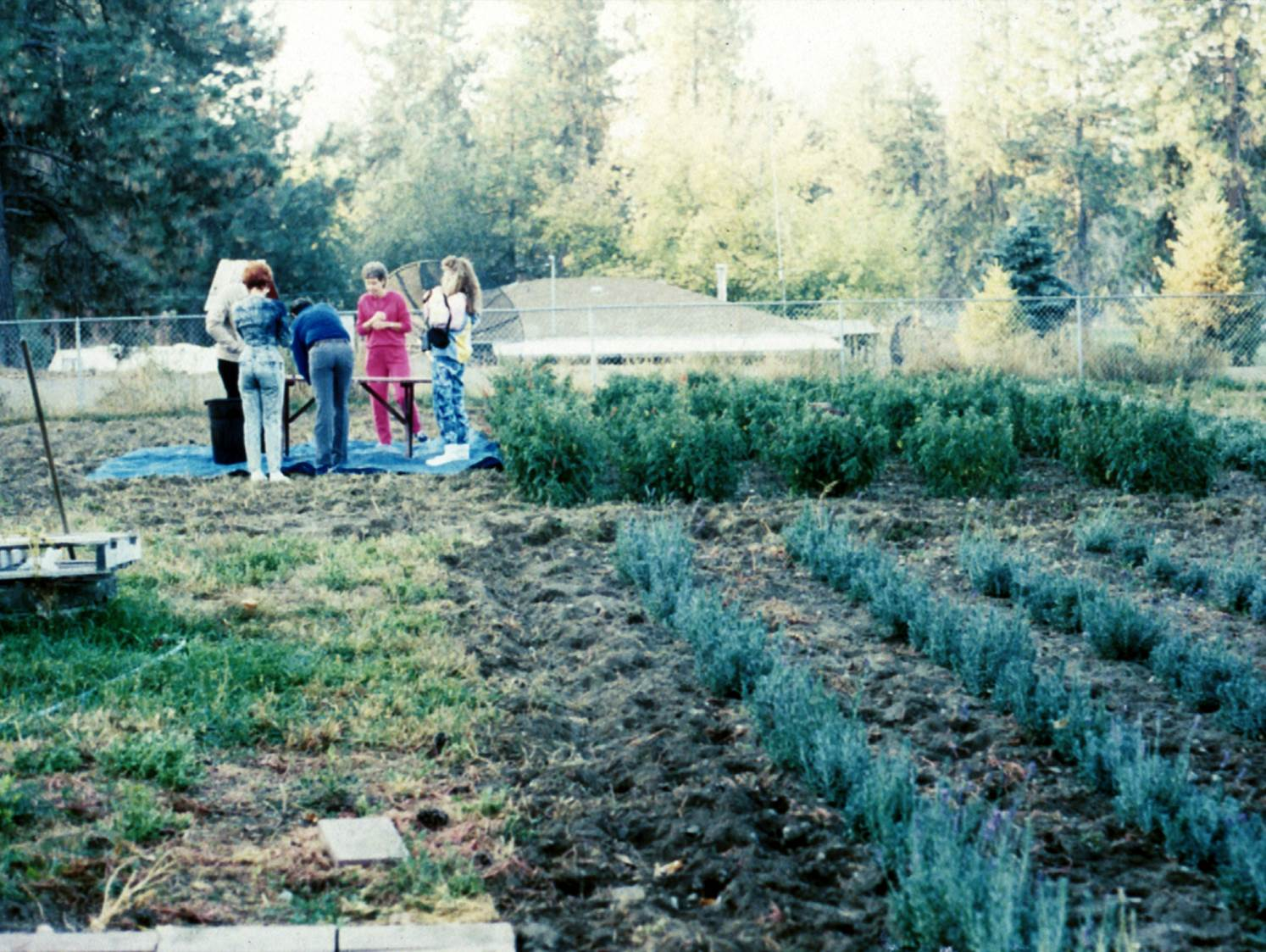 It all started here in Spokane, Washington, on a quarter-acre plot where I planted lavender seeds I brought from France.