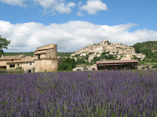 Young Living's lush lavender fields at the Simiane-la-Rotonde, France, Farm.