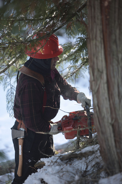 Even though a horrible logging accident on February 2, 1973, temporarily put Gary Young in a wheelchair, he can now be found each winter still logging. However, now he is logging balsam fir, black spruce, blue spruce, pine, and other conifers that are then chipped and distilled for the production of essential oils.