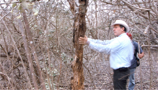 This 2005 photo shows Gary investigating palo santo after which he began distilling the wood.